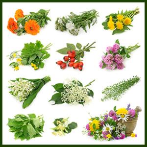 Medicinal Herb Collage